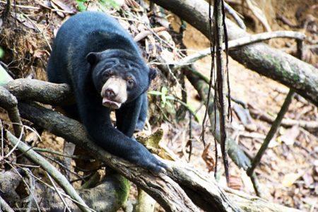 Malysia, Borneo