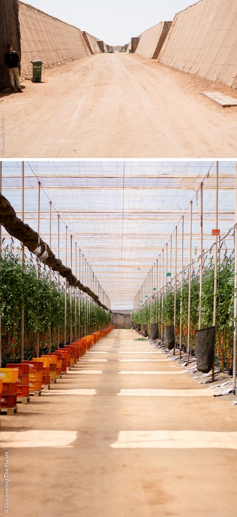Västsahara, Tomatodling 1