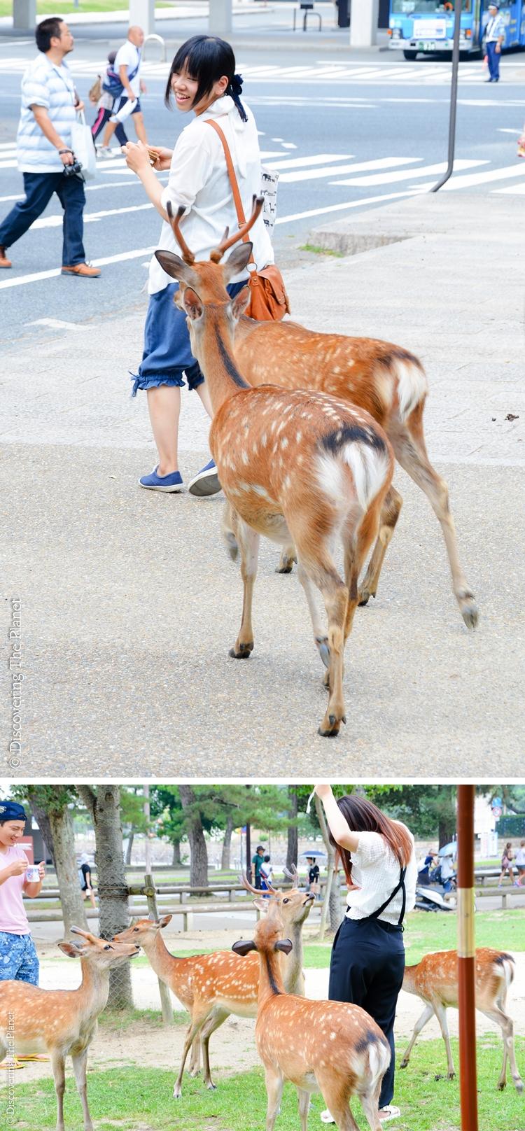 Japan, Nara 1