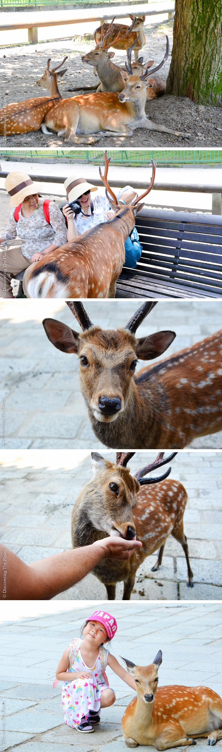 Japan, Nara 3