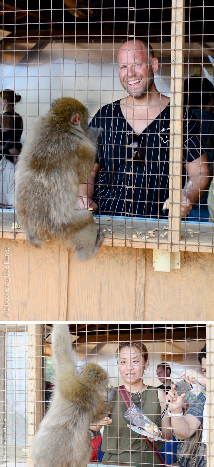 Japan, Arashyima Monkey 3
