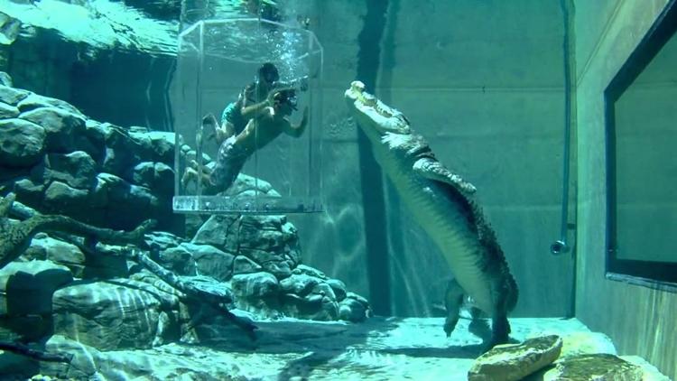 Simma med krokodiler 1