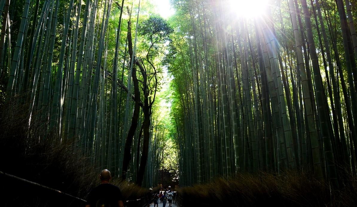 Året, Arashiyama