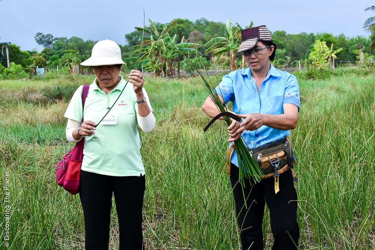 Thailand, Chantaburi, Mattvävning (2)