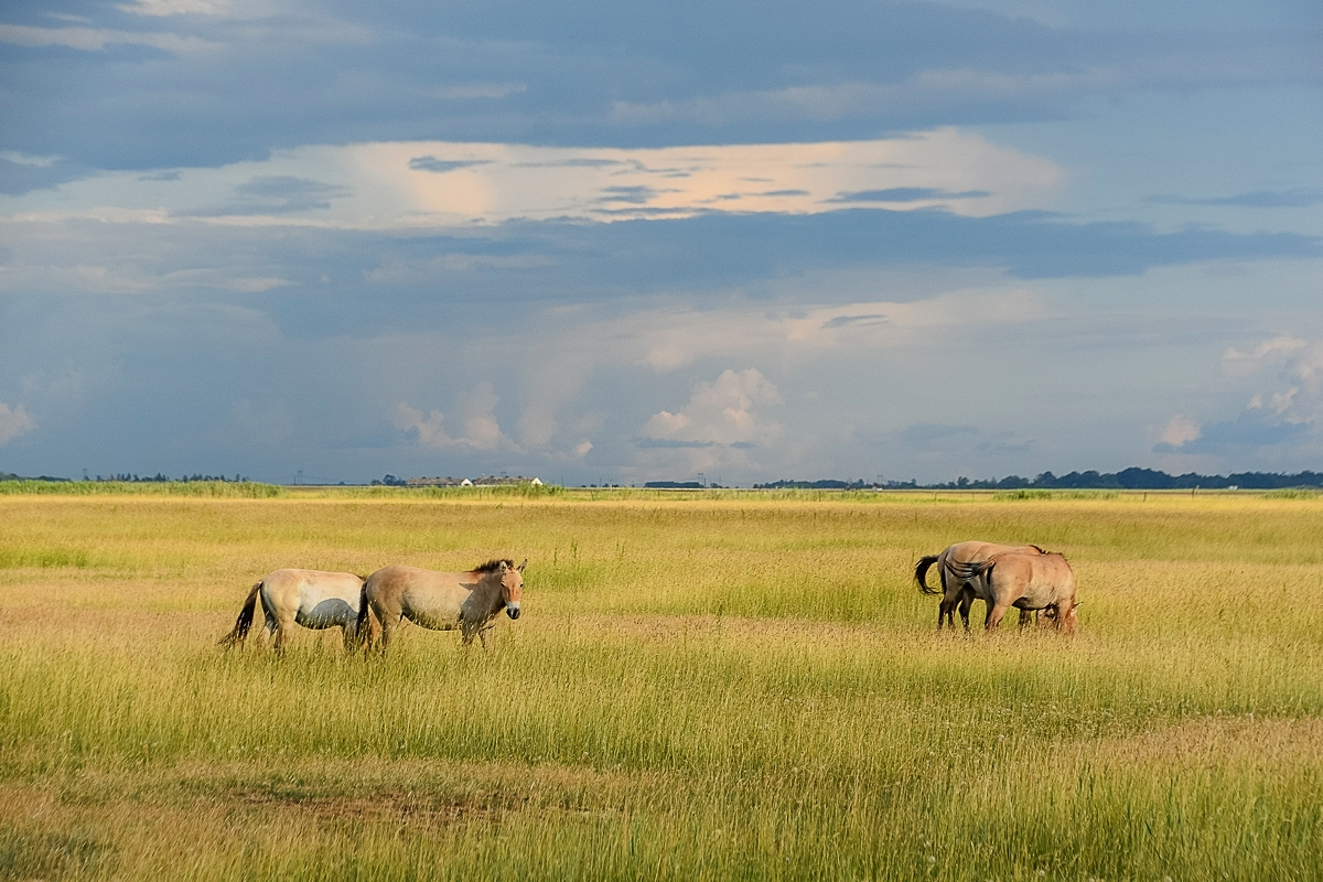 Ungern, Hortobagy Safari (18)