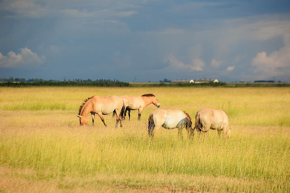 Ungern, Hortobagy Safari (20)