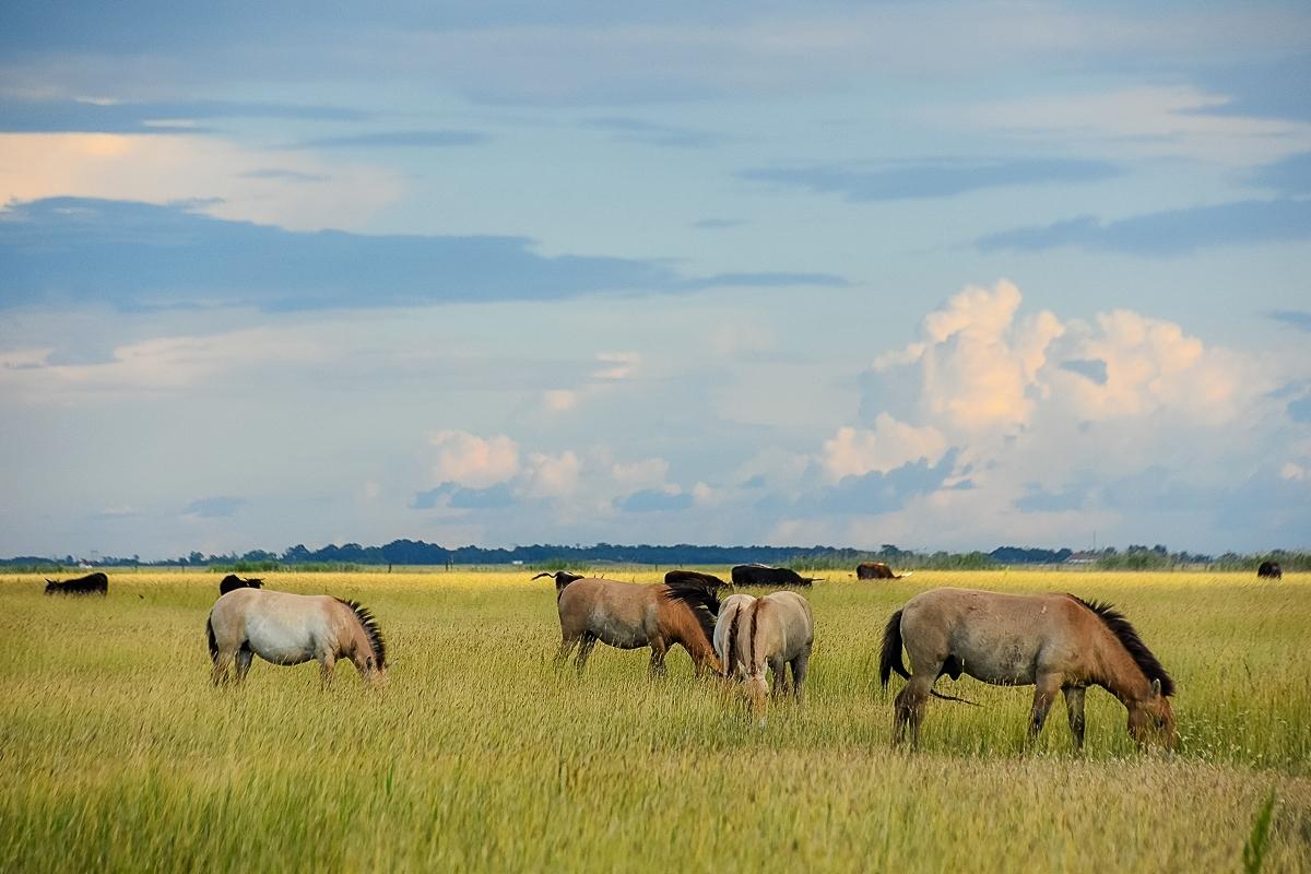 Ungern, Hortobagy Safari (21)
