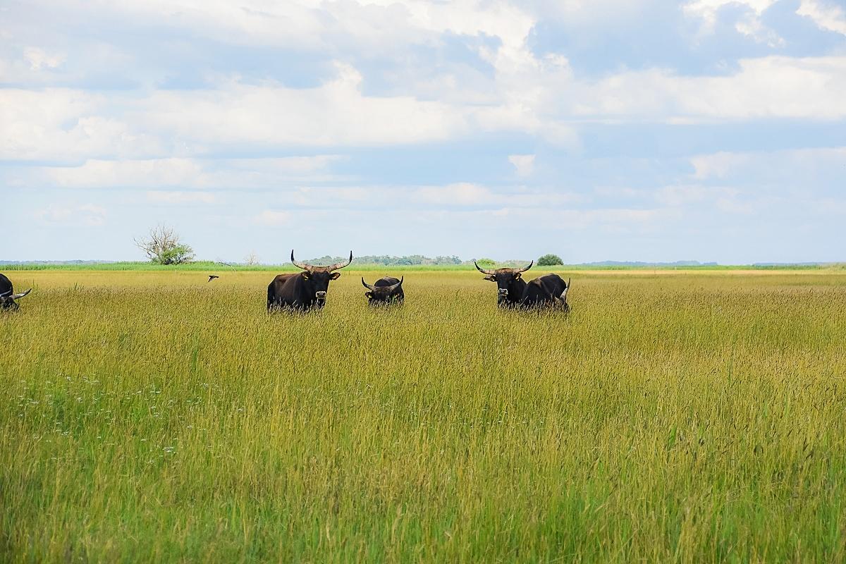 Ungern, Hortobagy Safari (4)