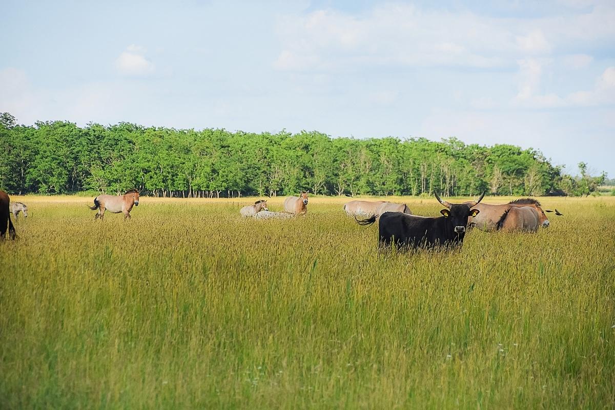 Ungern, Hortobagy Safari (5)