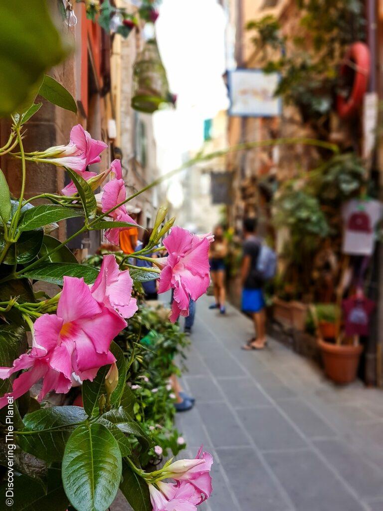 Italien, Corniglia  (11)