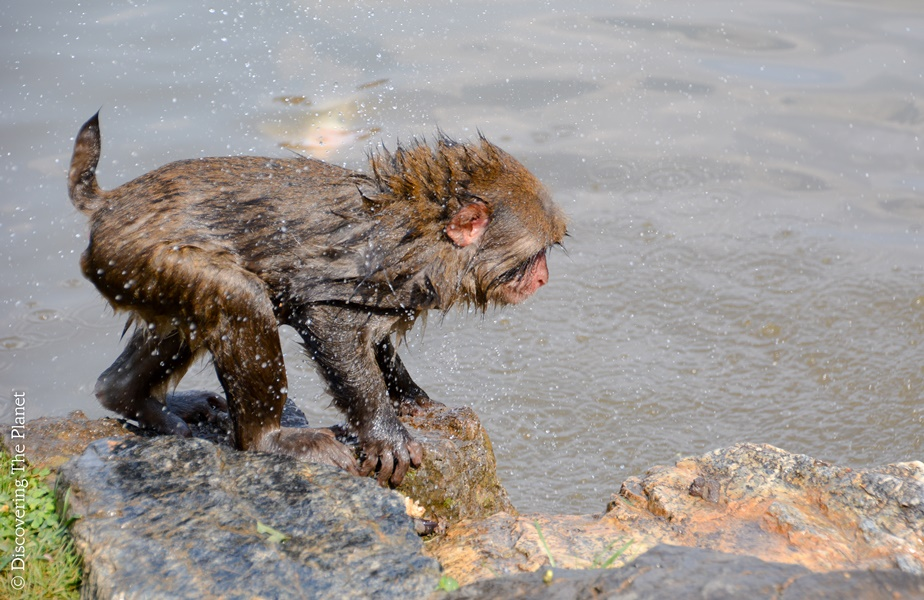 nio-saker-att-gora-i-kyoto-arashyima-monkey-park
