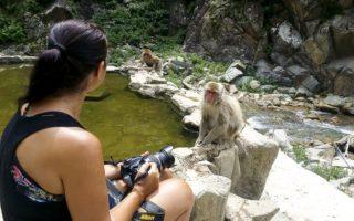 Japan, Nagano, Jigokudani Monkey Park