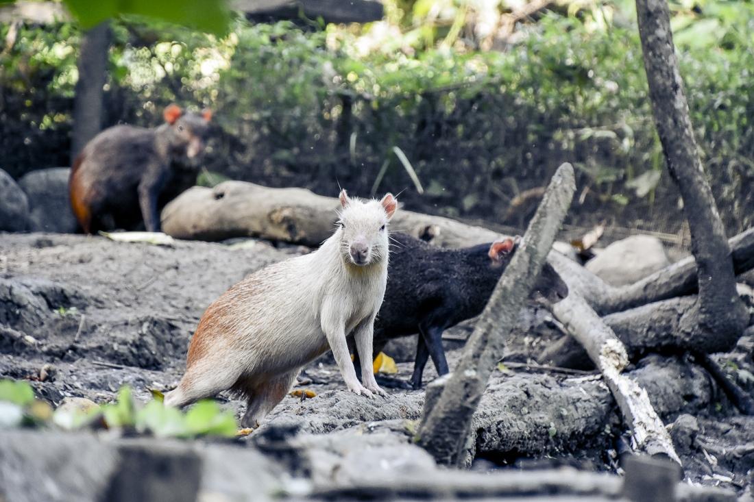 Tobago, Corbin Wildlife Scantuary