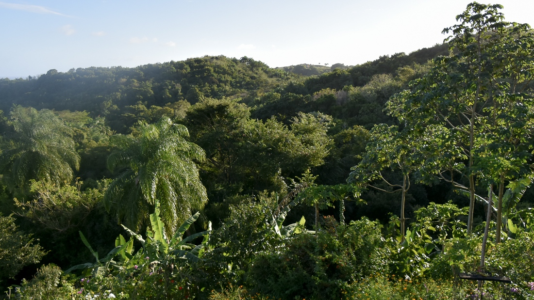 Tobago, Corbin Wildlife Scantuary