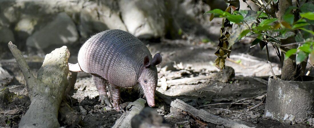 Tobago, Corbin Wildlife