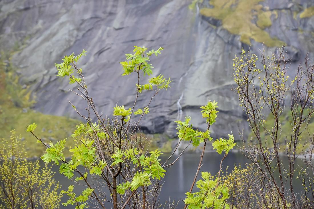 Norge, Lofoten