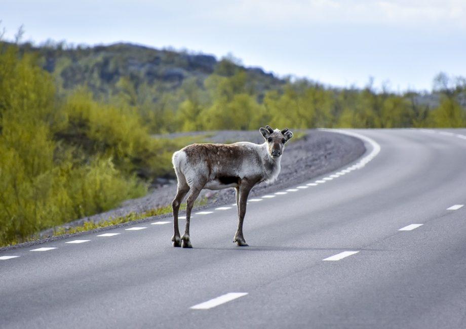 Roadtrip från Kiruna i Svenska Lappland till Lofoten i Norge