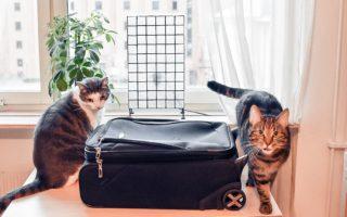 Väskan, packa