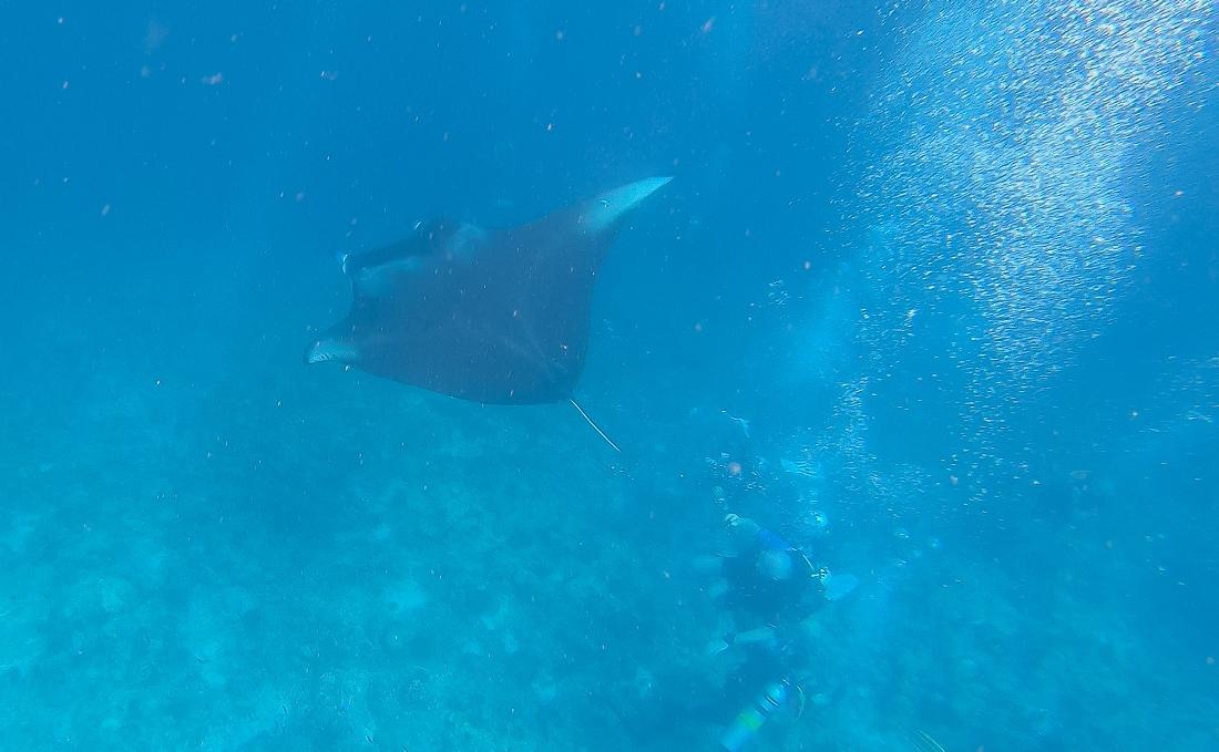 Maldiverna, Mantor, djävulsrockor