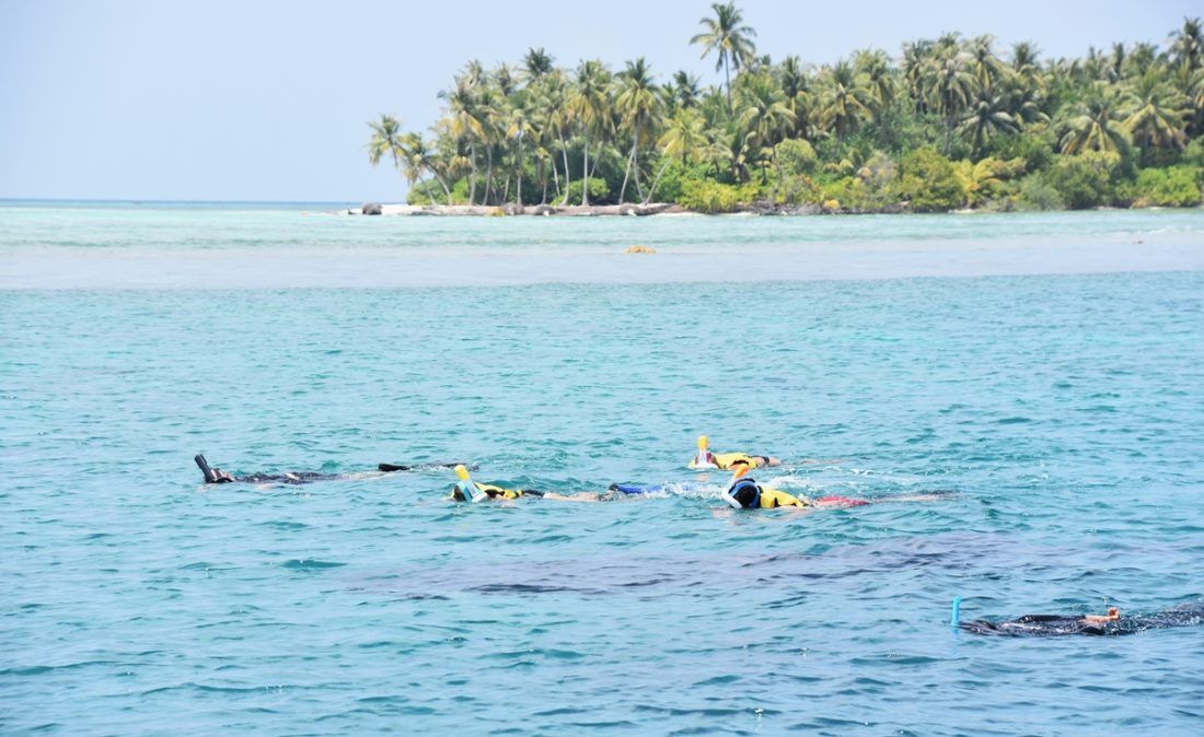 Maldiverna, Snorkla med manta och valhaj