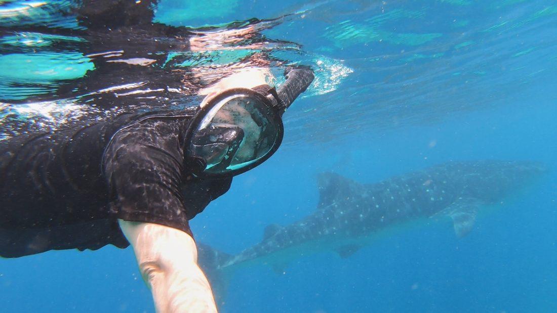 Snorkling med djävulsrockor och valhajar på Maldiverna