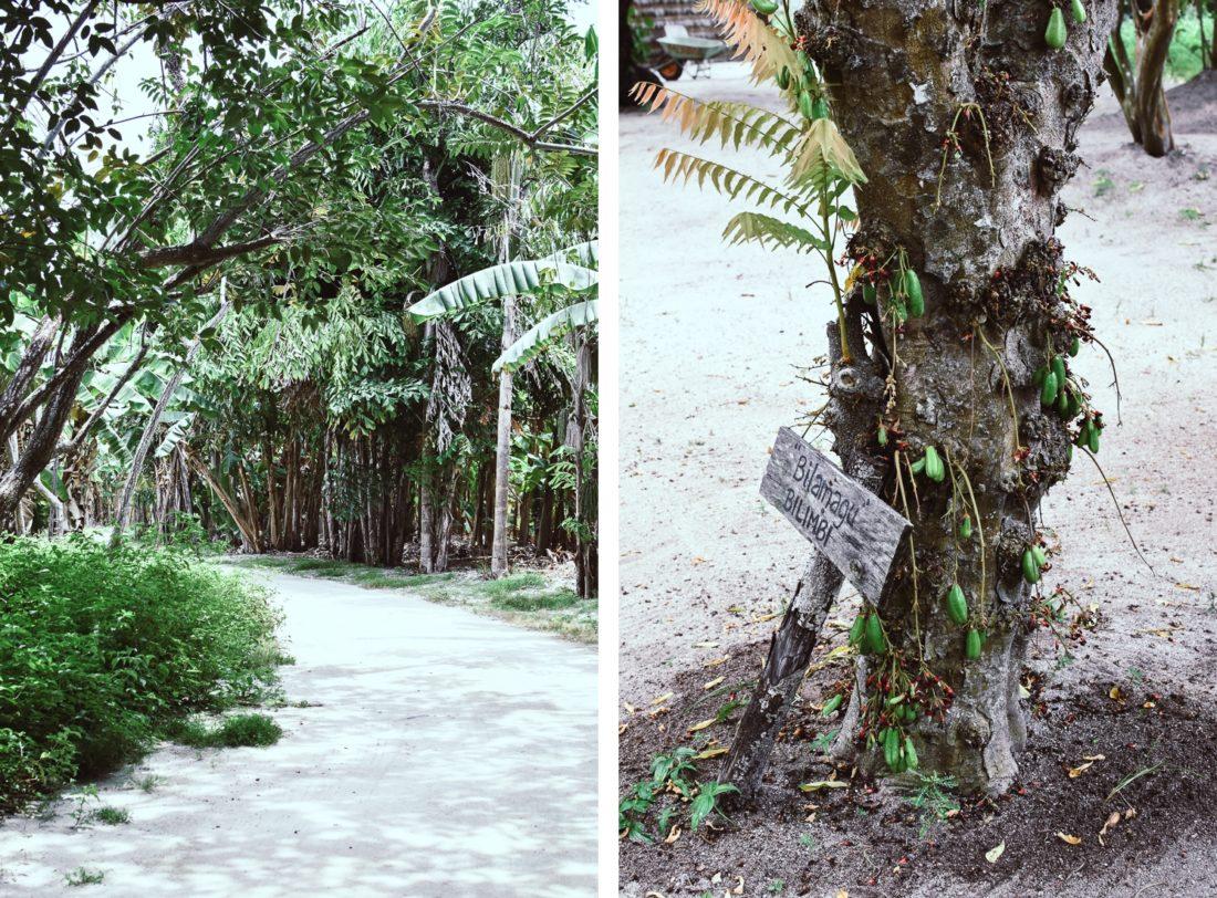 Maldiverna, Sun Island Resort, trädgård