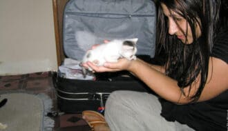 Kattmöten på resor, Zanzibar